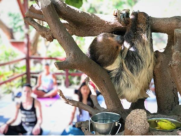Heather Beltran - Sloth Yoga
